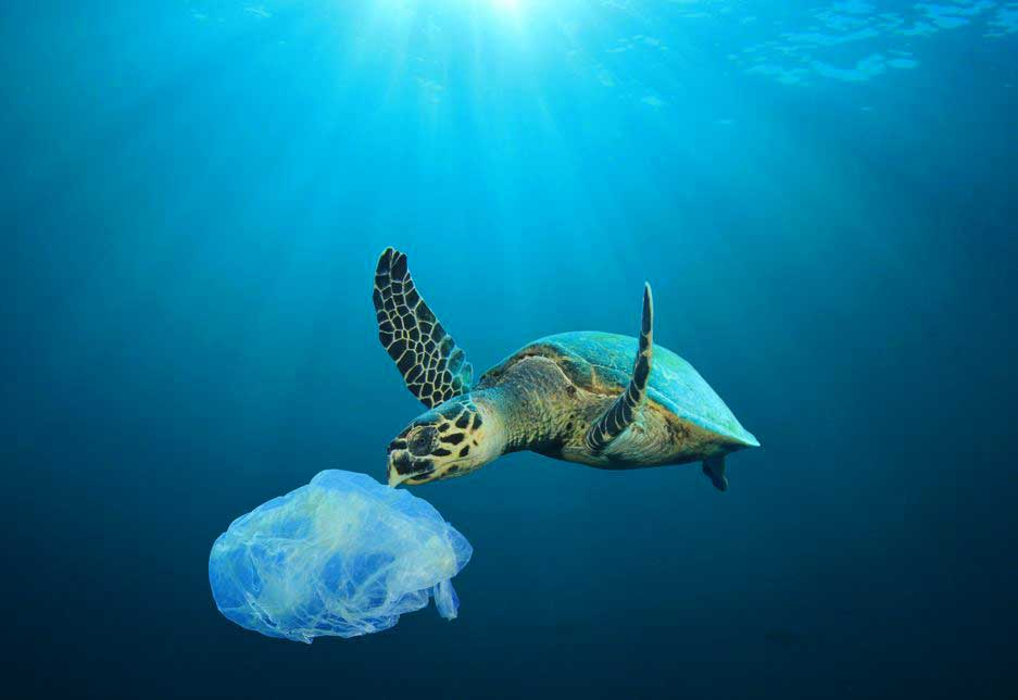 Plastic in the Ocean with Turtle