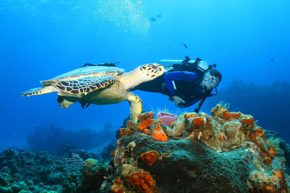 Top 10 New Diver Improvements